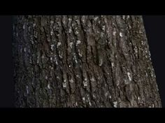 Substance Work: Bark [EP37] - YouTube