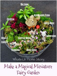 How to make a whimsical miniature fairy garden with minimal accents using purslane, asparagus fern, hens and chicks, cel Fairy Garden Pots, Indoor Fairy Gardens, Dish Garden, Garden Terrarium, Fairy Garden Houses, Miniature Fairy Gardens, Succulents Garden, Flowers Garden, Garden Plants