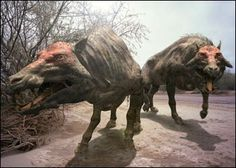 Entelodonts. An extinct family of hoofed mammals related to the current pig and animals with hooves. Distributed in Asia and North America made between 45 and 25 million years.
