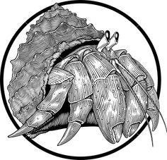 Hermit crab Royalty Free Stock Vector Art Illustration