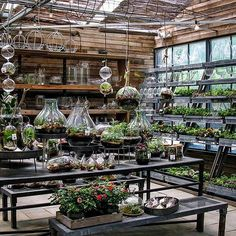 The treehouse greenhouse