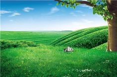 Green fields and rabbits