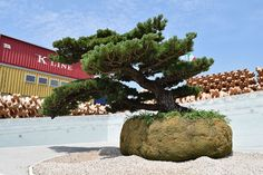 Big bonsai at Japan pavilion, Expo Milan 2015 #raiexpo #expo2015 #italy #milan #worldsfair #architecture #japan #pavilion #bonsai