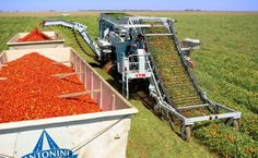 From Ketchup to California Cuisine: How the Mechanical Tomato Harvester Prompted Today's Food Movement