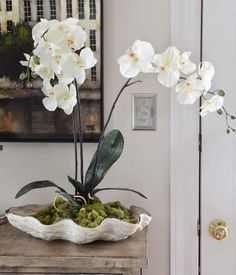 Indoor plants are among the most lucrative elements of the home decoration and also are a means to lead a healthful lifestyle. Plants have a certain life. Indoor Orchids, Orchids Garden, Indoor Plants, Flowers Garden, Garden Plants, Orchid Planters, Orchid Pot, Shell Centerpieces, Orchid Arrangements