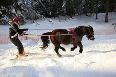 Ski Joëring dans la station Famille Plus Les Carroz-d'Arâches