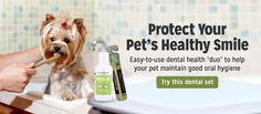 Protect Your Pets Smile With This Dental Gel and Eco-Friendly Pet Toothbrush