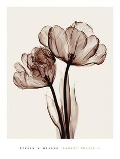 Fiori, fotografia a raggi X in seppia. Flower, X-ray photography in sepia. Fotografia / Photography: Steven Meyers #vemmarrone