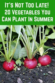 Vegetable Garden Planner, Veg Garden, Vegetable Garden Design, Fruit Garden, Edible Garden, Summer Garden, Harvest Garden, Planting Vegetables, Growing Vegetables