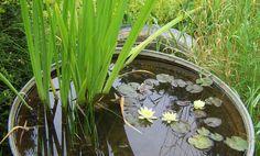 Vous pourrez choisir un tonneau, une grande poterie ou une lessiveuse en zinc pour créer un petit jardin aquatique, source de détente et de biodiversité !