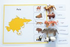 Montessori Animal Continents Activity Sheets Montessori Animal Continents Activity Sheets The post Montessori Animal Continents Activity Sheets appeared first on Pink Unicorn. Animal Activities, Infant Activities, Language Activities, Science Activities, Activities For Kids, Continents Activities, Les Continents, Montessori Science, Montessori Toddler