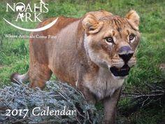 2017 Noah's Ark Calendar