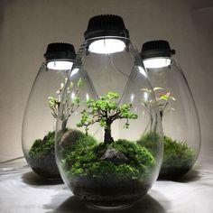 Terrarium ニレケヤキの若葉 | Mosslight-LED LED照明付テラリウム