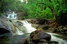 Rainforest at Atherton tableland Queensland - bewri Cool Places To Visit, Places To Travel, Places To Go, Atherton Tablelands, Cairns Queensland, Never Stop Exploring, Travel Tours, Day Trips, Adventure Travel