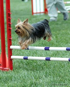 There is lots of grass outside, too, for all kinds of dog shows - at the Legacy Events Center in Farmington
