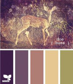 design seed global color palette pinterest | Seeds Design | Color Palette |