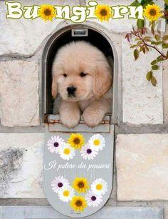 Buongiorno cagnolino
