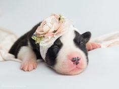 Newborn Puppy Photoshoot Puppy Photography Newborn Puppy Borsky