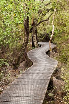 ˚Boardwalk to Hawkes Lookout -Kahurangi National Park, New Zealand New Zealand South Island, Forest Path, Beautiful Forest, Paths, Count, National Parks, State Parks