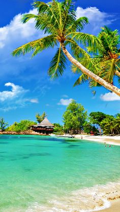 Tropical Palm Beach. #iphone #wallpaper #beach #paradise #tropical