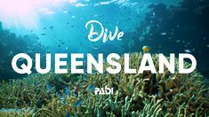 Experience World-Class Diving in Queensland, Australia The Great Barrier Reef in has always been a world-renowned location for divers in search of the ultima. Belize Resorts, Belize Vacations, Belize Travel, Dream Vacations, Belize Diving, Scuba Diving, Snorkeling, Belize City, Coral Reefs