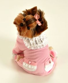 I do love this outfit! Makes me want to get a little girl Yorkie