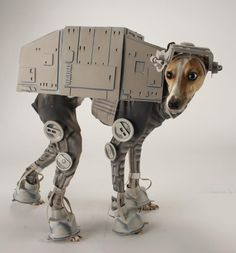 Unfortunately, my dog is too short for this. Maybe she could be a Jawa?