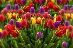 Over gratis billeder for Forår og Natur - Pixabay