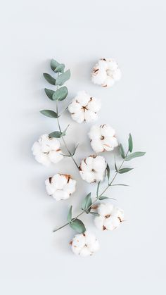 Et Wallpaper, Flower Phone Wallpaper, Plant Wallpaper, Iphone Background Wallpaper, Pastel Wallpaper, Tumblr Wallpaper, Screen Wallpaper, Plant Aesthetic, Flower Aesthetic