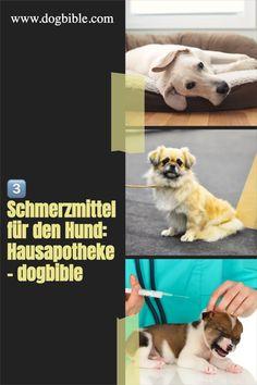 Hat unser Hund Schmerzen, wollen wir natürlich schnellstmöglich helfen. Deshalb ist es sinnvoll, ein paar Medikamente und Hausmittel zuhause zu haben, die bei einer verletzten Kralle, einem gezerrten Muskel oder einem Insektenstich helfen können. Labrador, Dogs, Animals, 10000 Steps, Dog Care, Muscle, French Bulldog Shedding, Vet Office, Animales