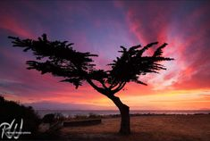 Big Sunsets from a Big Man Chair Sunset Images, Sunset Photos, Amazing Sunsets, Beautiful Sunset, Dawn And Dusk, Cypress Trees, Tree Silhouette, Web Design Company, Sunset Photography