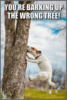 Barking up the wrong tree Funny Animal Memes, Funny Animals, Cute Animals, Pets, Inspiration, Pretty Animals, Animals And Pets, Biblical Inspiration, Cutest Animals