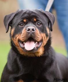 best dog!