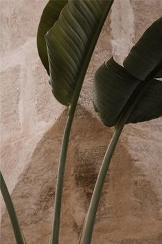 Aesthetic Backgrounds, Aesthetic Iphone Wallpaper, Aesthetic Wallpapers, Skincare Branding, Cactus Plante, Motif Art Deco, Plant Aesthetic, Brown Aesthetic, Earth Tones