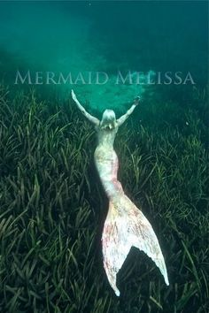 Mermaid Melissa Real Life Mermaid