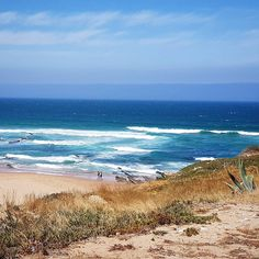 The wild and wonderful Atlantic coast in Portugal- not far from the calm soft beaches of Cascais it's a surf paradise. The breakers are just right for an excited four-year-old to paddle and squeal in too (hand safely held). These lovely dunes are not far from Praia Guincho when we got briefly lost meeting @onetinyleap - Praia da Cresmina.