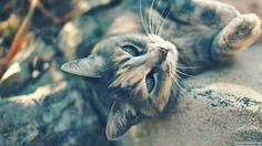 Sevimli Kedi #Cat #Cute