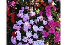The Best Flowers to Plant in Morning Sun & Afternoon Shade | eHow