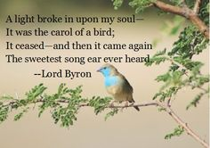 the carol of a bird. could be literal but it could also be a metaphor for the voice of the lady he loved. how I love poetry! Art Quotes Funny, Bird Quotes, Nature Quotes, Poetry Quotes, Music Quotes, Bird Poems, Wilderness Quotes, Path Quotes, How To Memorize Things