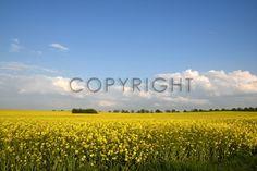 http://www.fineartprint.de/?page=bilder_mod/bild_image_preview.php&t