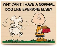 """""""Why don't I have a Normal Dog like everyone else?"""", Charlie Brown and Snoopy."""