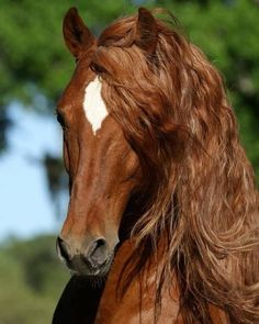 Finally a conditioner that gives my mane more body wait till I tell the guys! #SaddlesForSale #Horses #MySaddleTrader