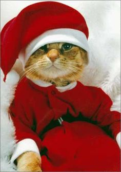 funny christmas animals - Google Search