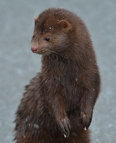 Saw one of these little guys yesterday ---sooooo cute.