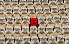 Blog de Agências de Resultados - Página 3 de 12 - Blog da Resultados Digitais para agências que querem comprovar o ROI das suas ações, aumentar sua receita e se destacar no mercado com serviços de Inbound Marketing.