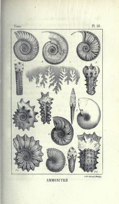 2 - Traité élémentaire de paléontologie; - Biodiversity Heritage Library