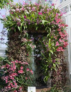 an orchid arbor? or is that a mirror in there? Orchid Show, Garden Arches, Orchids Garden, Easy Garden, Amazing Flowers, Flower Wall, Botanical Gardens, Garden Design, Yard