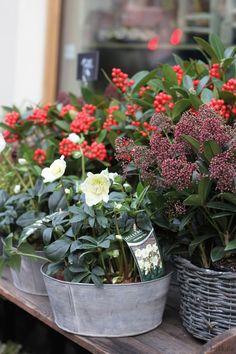 KUKKALA #Floranna #flowershop