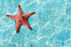 orange-starfish-underwater-plain-1.jpg (1650×1100)