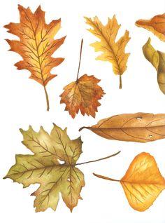 Folhas de outono desenhadas por mim para um fabricante de papel de decoupage.